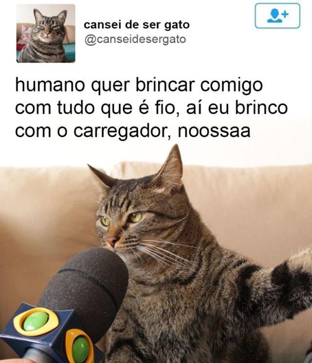 gato dando entrevista